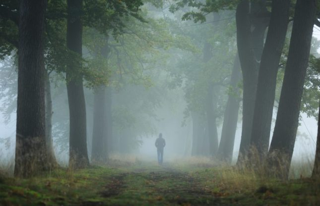 Person-walking-alone-in-woods-800x516